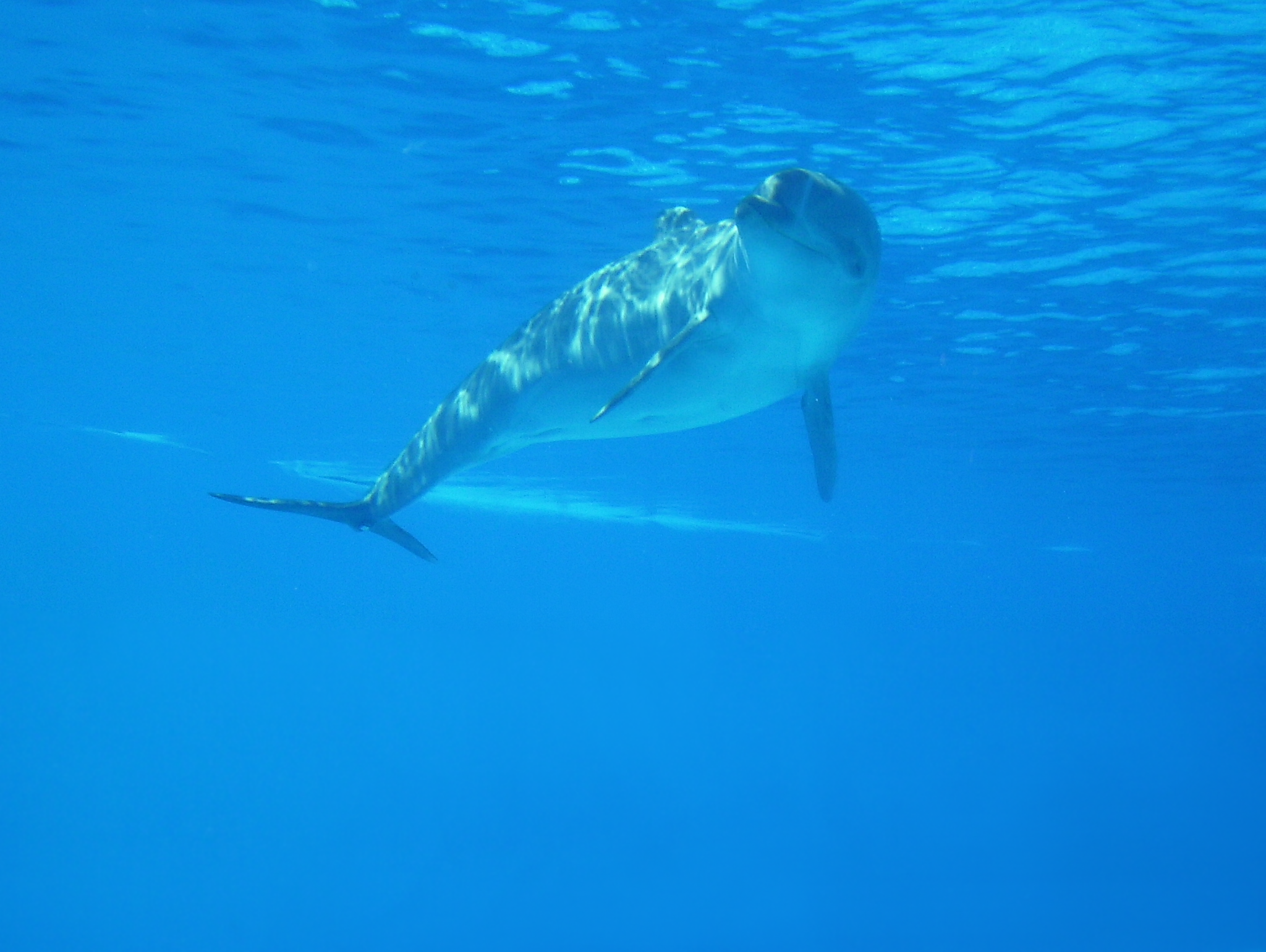 Delfin-Hintergrund