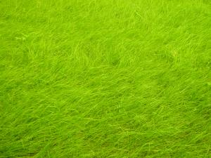 Wiesen-Hintergrund2